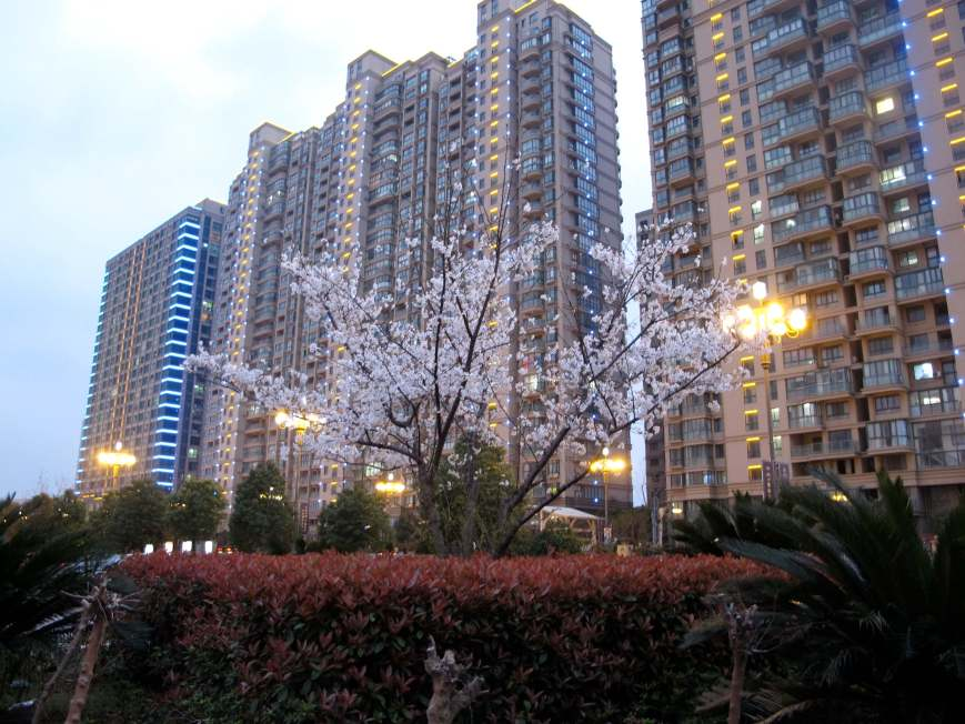 blossom buildings