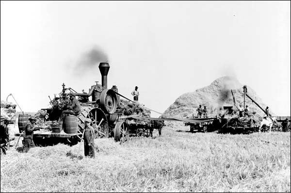 threshing_011.jpg
