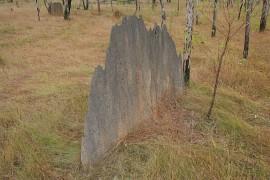 magnetic_termite_mound.jpg